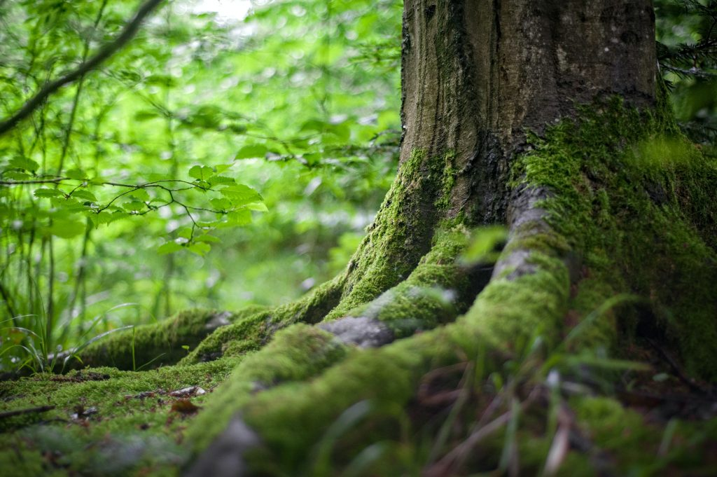 Tree trunk in forest